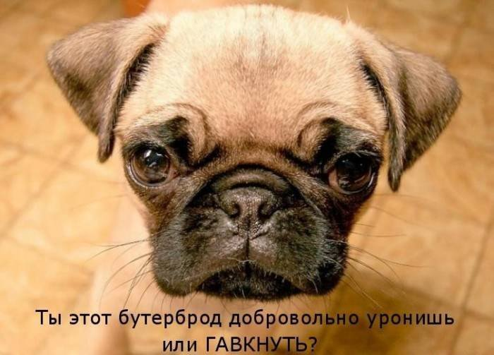 1379332942_dogs-picture-13