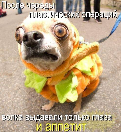 1379332944_dogs-picture-15