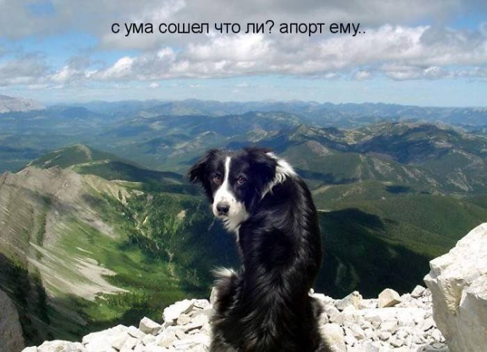 1379332949_dogs-picture-11