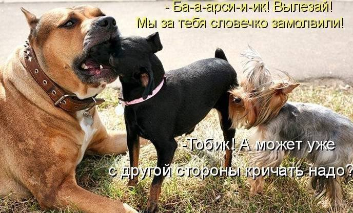 1379332954_dogs-picture-22