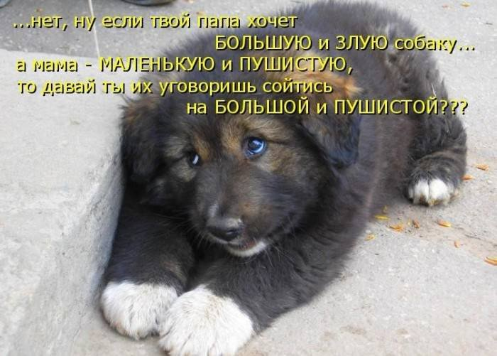 1379332957_dogs-picture-3
