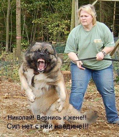 1379332970_dogs-picture-14