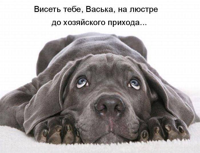 1379332978_dogs-picture-17