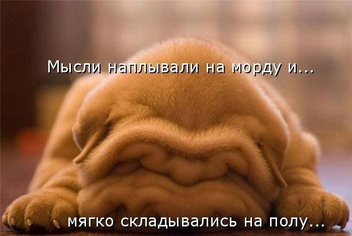 1379332994_dogs-picture-5