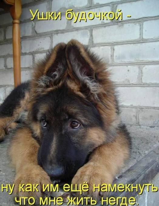 1379333019_dogs-picture-20