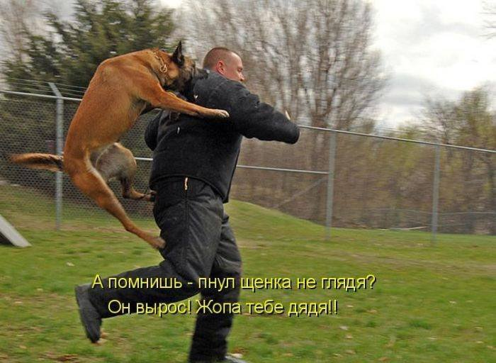 1379333024_dogs-picture-9