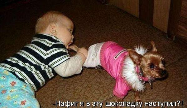 1379333032_dogs-picture-18