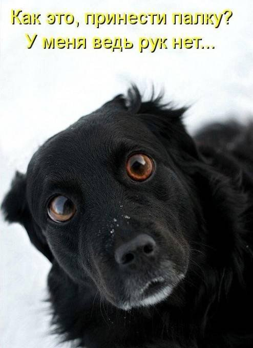 1379333034_dogs-picture-6