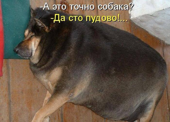 1379333036_dogs-picture-8