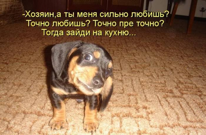 1379333038_dogs-picture-12