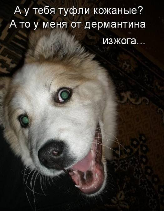 1379333039_dogs-picture-10